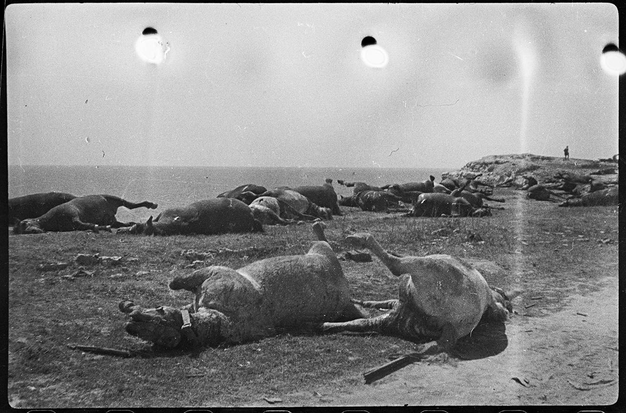 Лошади, расстрелянные немцами во время отступления в мае 1944 года