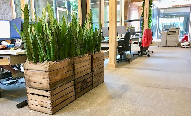 Sansevieria planten in retro vintage plantenbak plantenverhuur voor bedrijven kantoren feesten evenementen