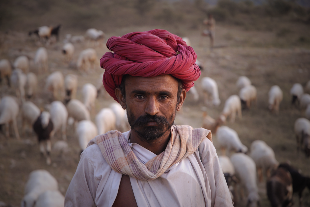 Ranakpur shepherd in Rajasthan, a photo by the photographer that made it as photo of the day on Light & Composition.