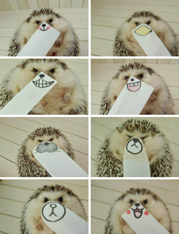 Funny animals of the week - 29 July 2016, cute animal photos, funny animal images, best animal picture