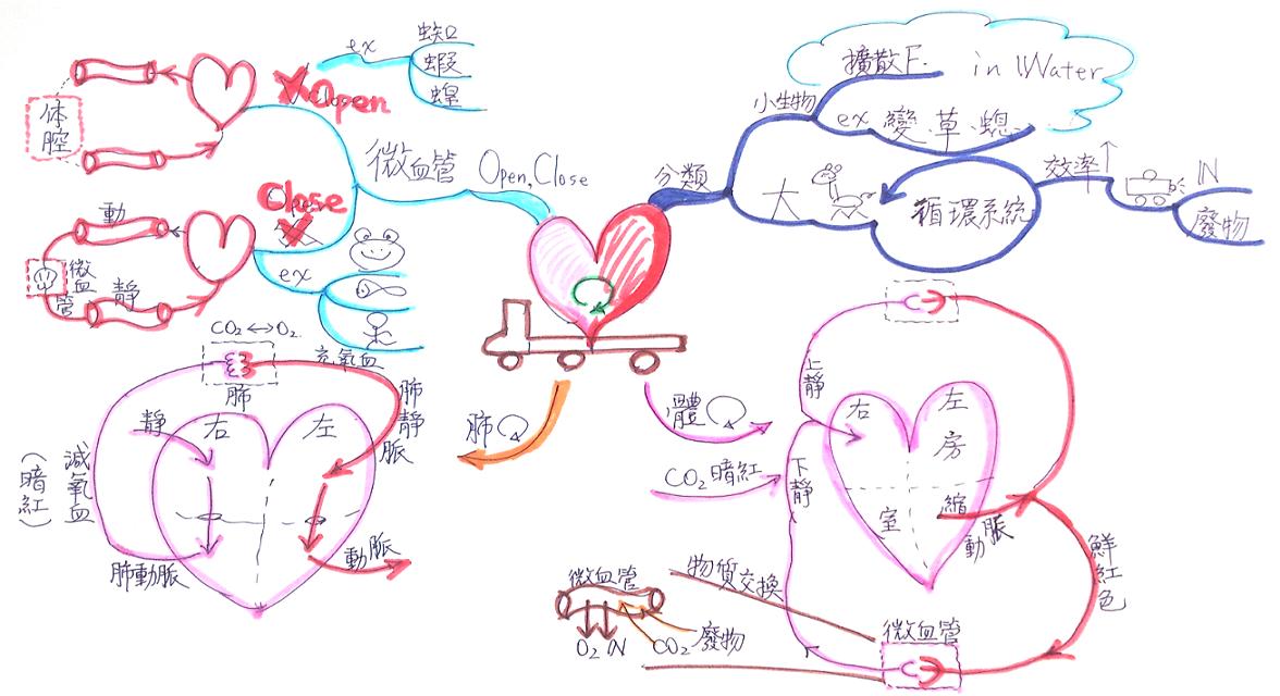 藍海學習計畫: 4-5 動物體內物質的運輸