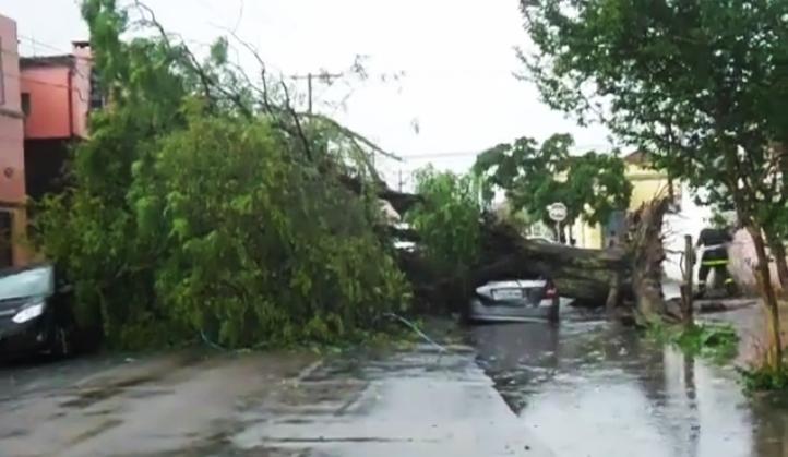 53c9d38582f9 ... uma árvore caiu em cima de um carro, no cruzamento das ruas Garibaldi e  Três de Maio, no bairro Porto, próximo ao centro da cidade.