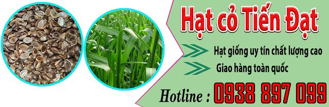Bảng giá bán hạt giống cỏ paspalum atratum