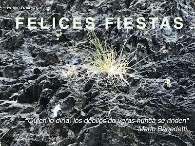 foto Emilio Gallego