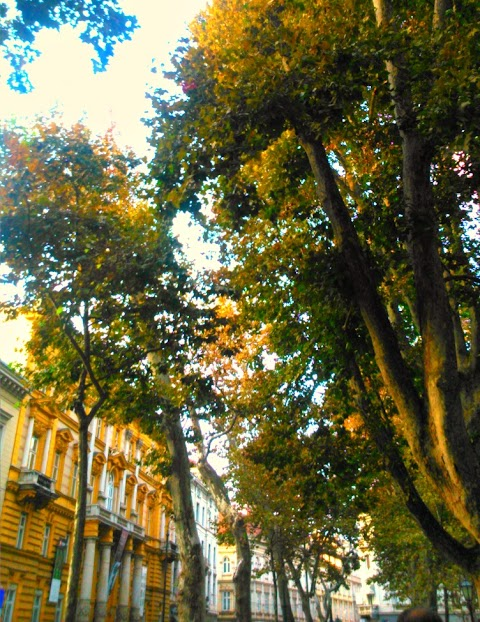 Autumn In The City!