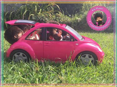 monchhichi emoji vacances voiture kiki bubbles Diana green ruby baby bebichhichi volkswagen new beetle dj cochon d'indépendance music rodéo cowboy