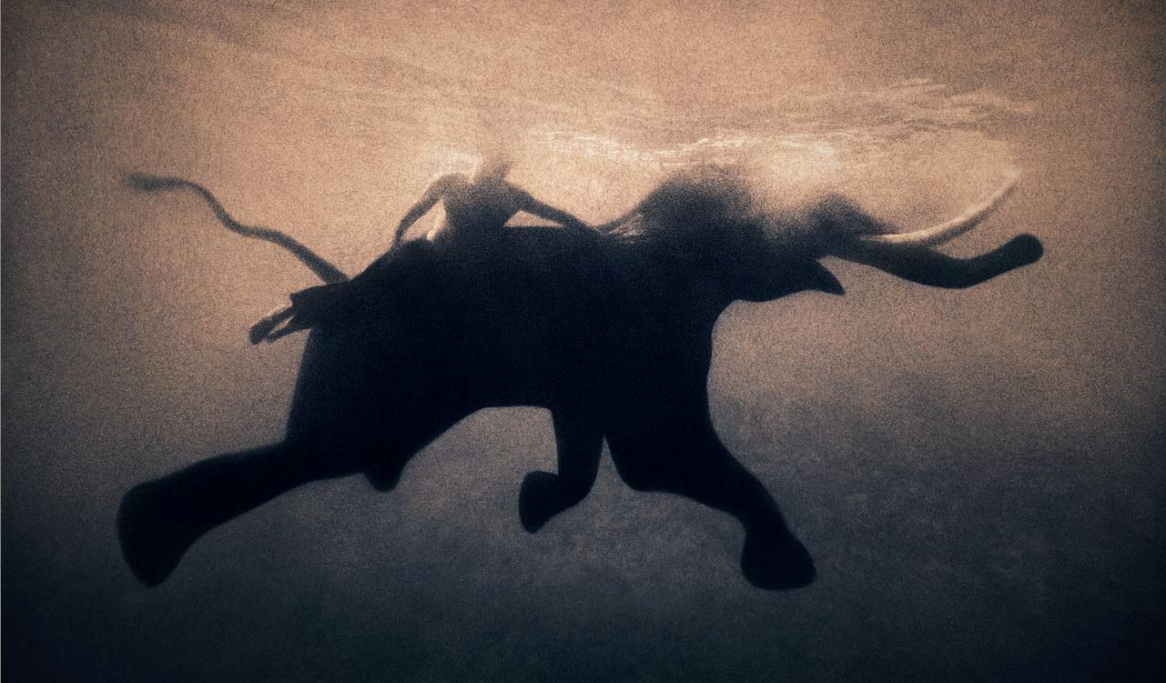 Elephant sperm journey