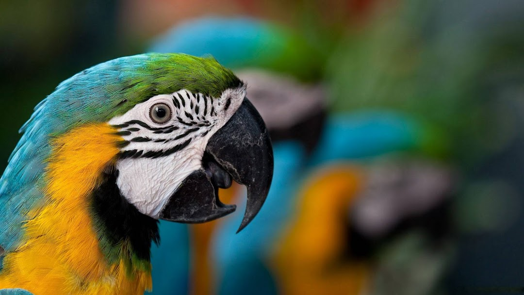 Awesome Parrot HD Wallpaper