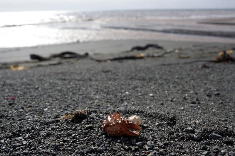 краб-стригун берег тихого океана камчатка