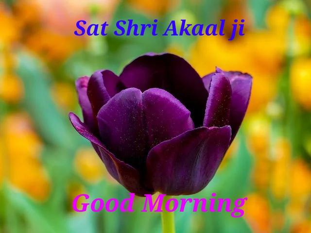 Sat Shri Akaal Good Morning