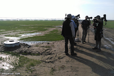 Aficionados a la ornitología en busca de especies poco frecuentes