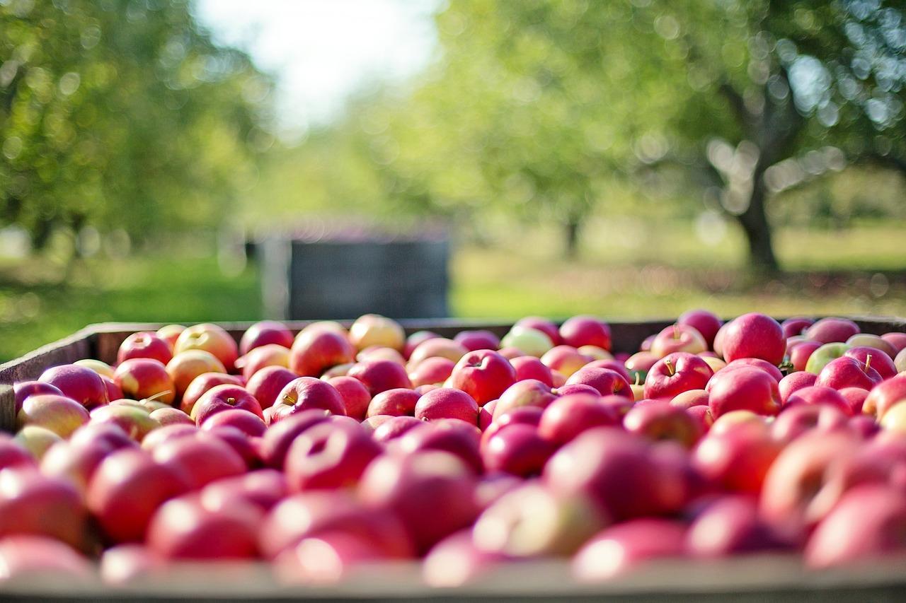 Kaupasta saa kotimaisia omenoita helmikuussa