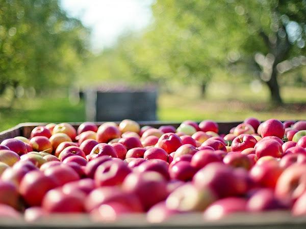 Kyllä minä niin mieleni ilahdutin - kaupasta saa vielä kotimaisia omenoita!
