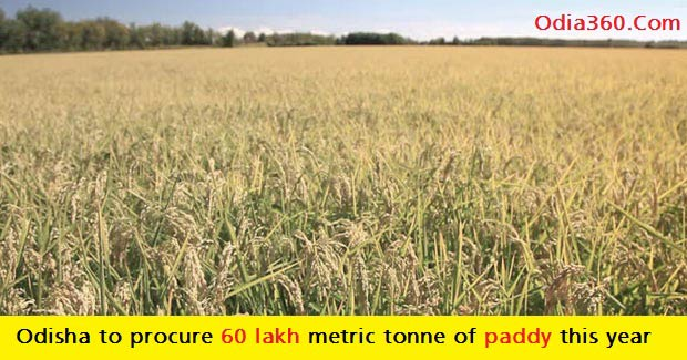 Odisha to procure 60 lakh metric tonne of paddy this year