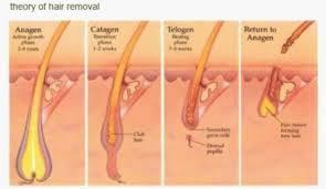 bikini area hair removal