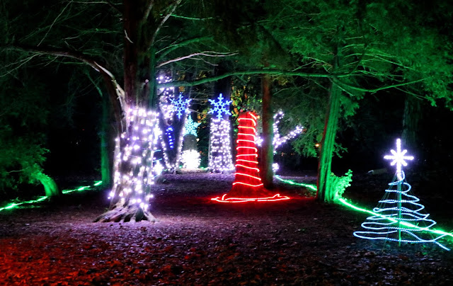 Lights wound around the trees, creating a Christmas display in the woods.