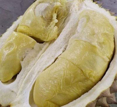 Durian Ucok, Wisata Kuliner Durian Medan Yang Wajib Kamu Coba