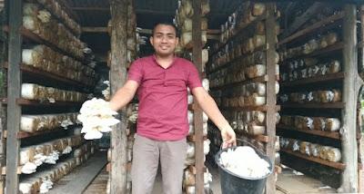 budidaya jual jamur tiram putih di bireuen aceh
