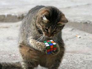 Conciencia e inteligencia:emciociones y expresiones sentimentales. Del alma animal, Francisco Acuyo