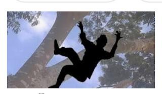 কুড়িগ্রামের উলিপুরে গাছ থেকে পড়ে ৬ষ্ঠ শ্রেণির শিক্ষার্থীর মর্মান্তিক মৃত্যু