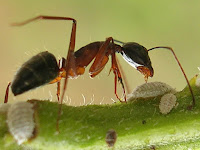Ant Animal Pictures