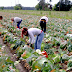 General Farm Worker - 5 Positions