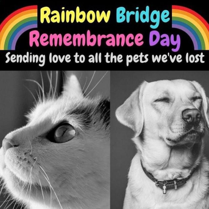 Rainbow Bridge Remembrance Day