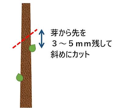 盆栽の剪定で枝を切る場所