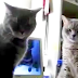 No One Believed Her When She Described Her Cat's Nightly Ritual. So She Caught This.