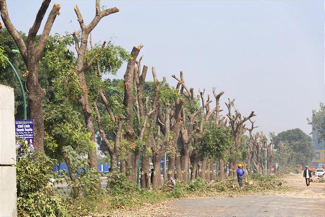 Chặt cây xanh trên đường Phạm Văn Đồng