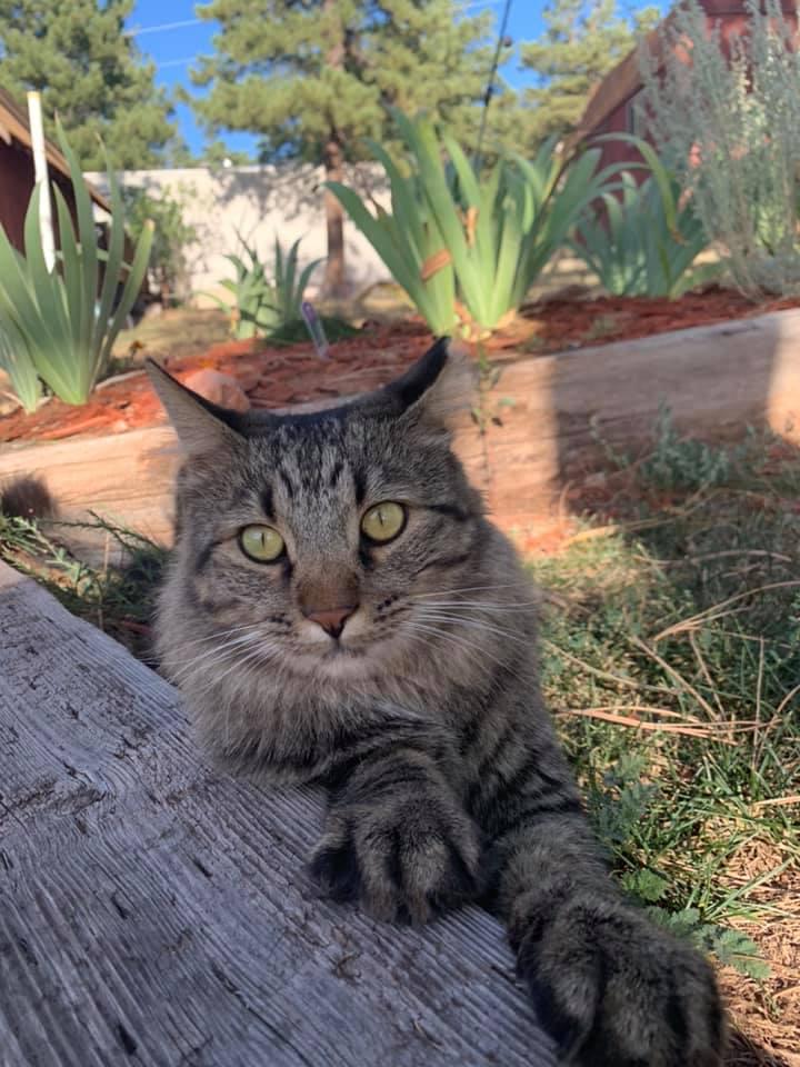 Kucing bermain di halaman