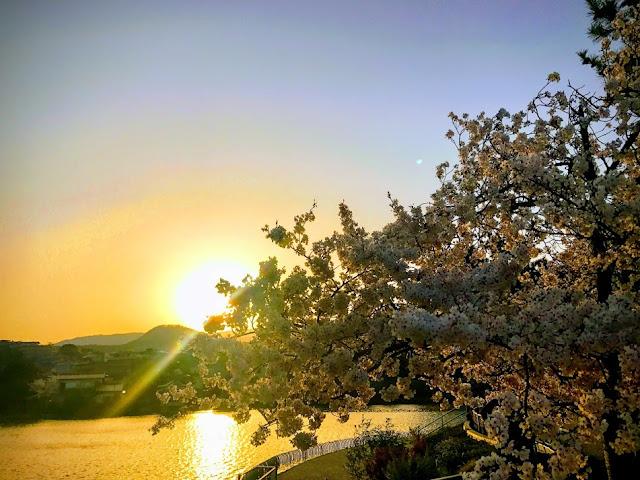イメージ:夕日と桜