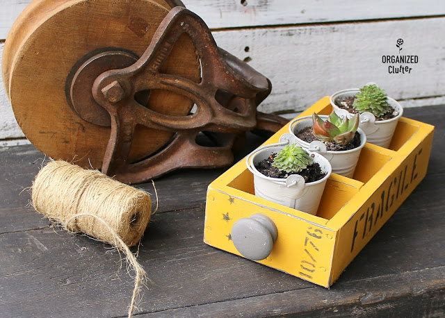 Photo of small drawer with succulent pails