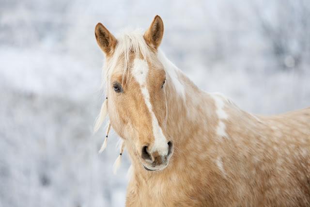 صور خيول قوية 2020