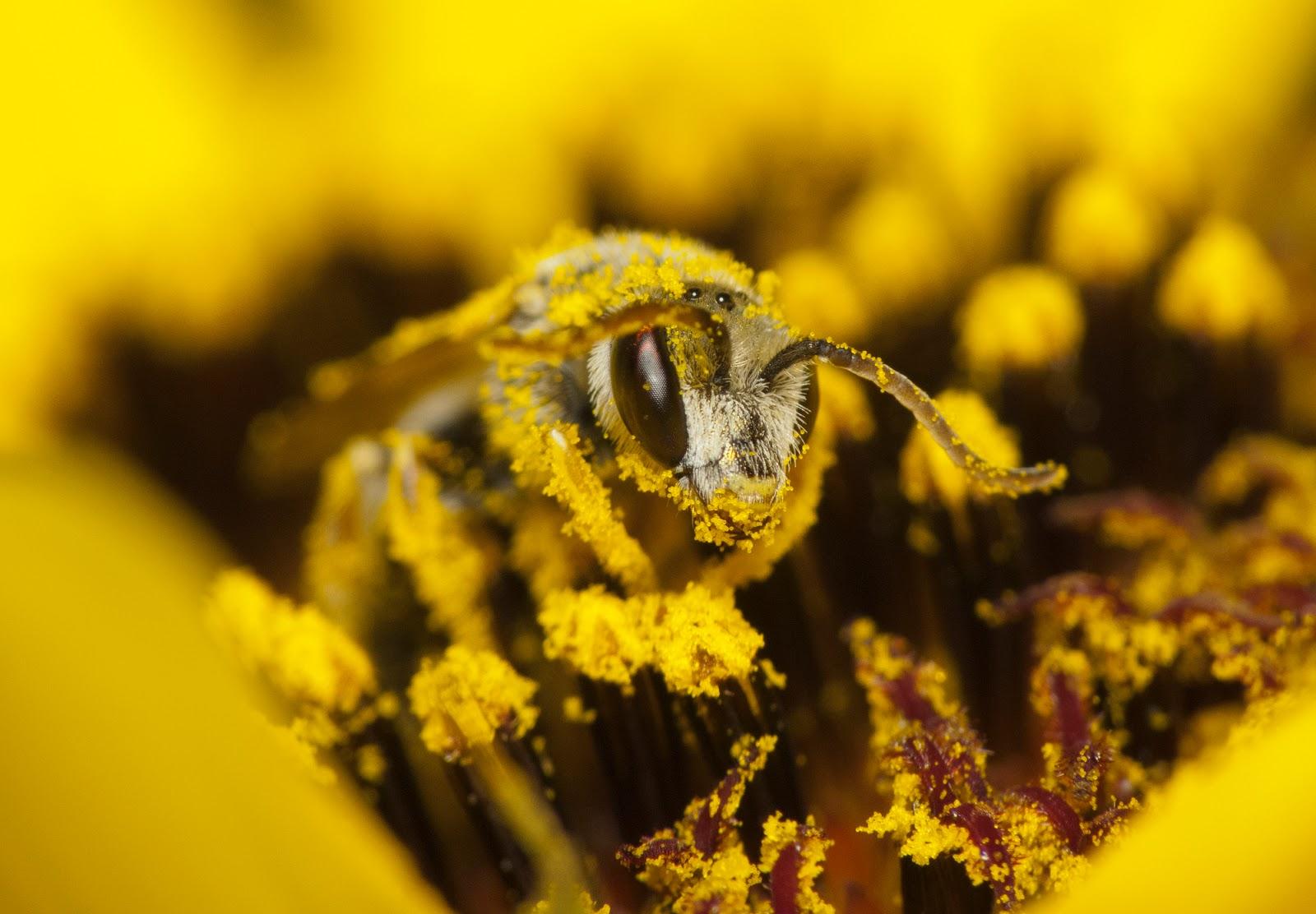 eScienceCommons: Better pollen barcoding breaking down ...