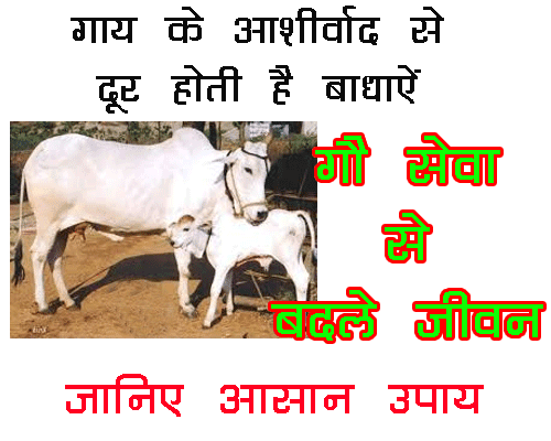 Gau sewa Ke Chamatkari Fayde, benefits of cow as per astrology