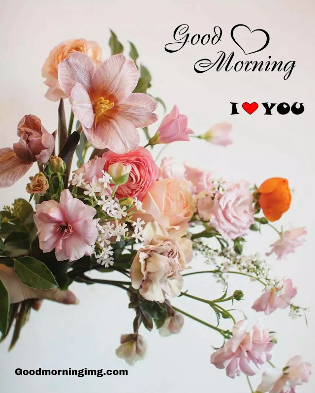 103+ Good Morrning Flowers Images , Photos  Free Download
