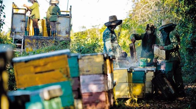 mật ong vô cùng tinh khiết