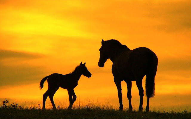 cute horse wallpaper