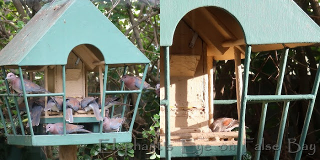 Doves and sparrow at feeder