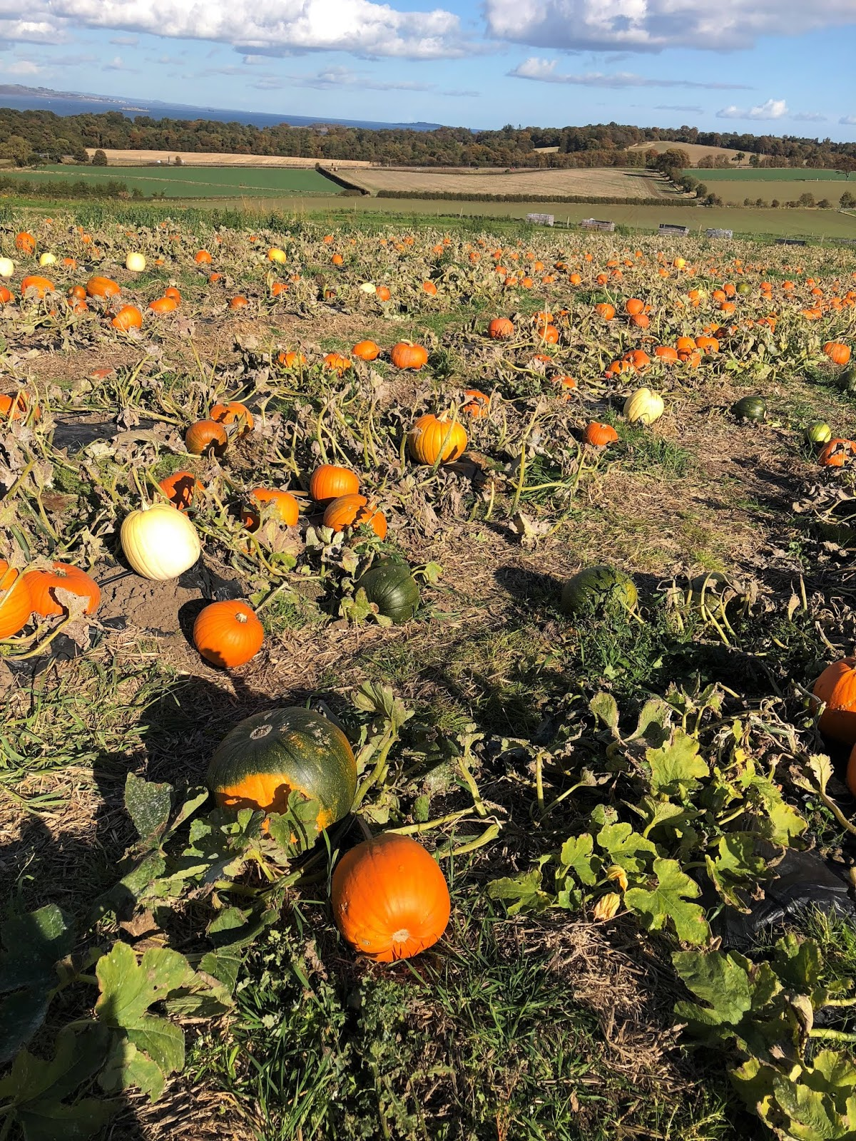Saturday-at-the-Pumpkin-Patch