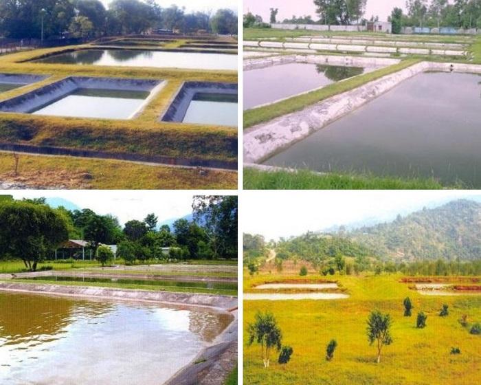 Fishing Farms in Kashmir