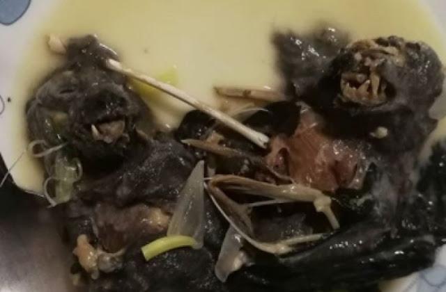 745x489-img-17288-sup-kelelawar-yang-diduga-yadi-penyebab-tersebarnya-instagramchrisfrankle