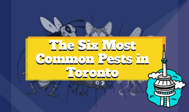 The Six Most Common Pests in Toronto