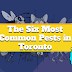 The Six Most Common Pests in Toronto #infographic