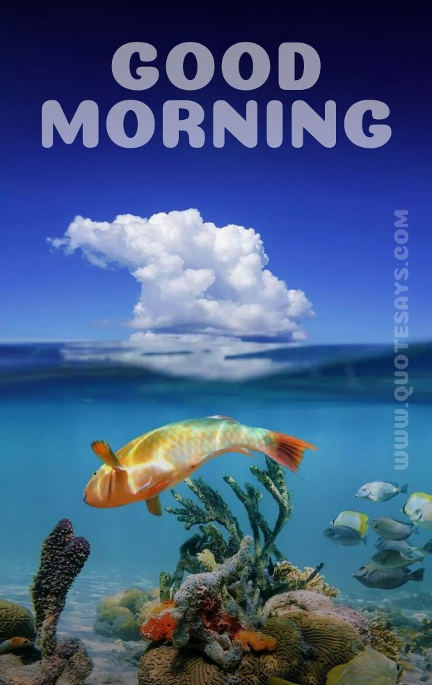 Beautiful Good Morning Fish and Clouds