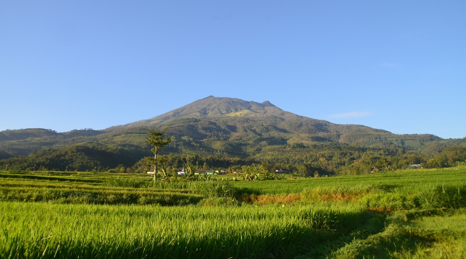 pemandangan Gunung Lawu (3.265 mdpl) - Karanganyer dan Magetan