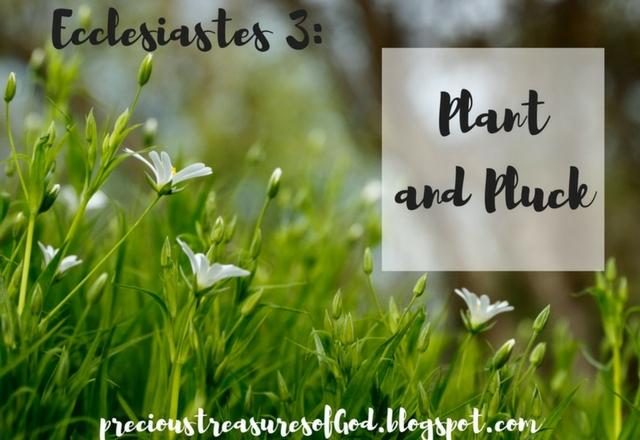 http://precioustreasuresofgod.blogspot.com/2018/01/ecclesiastes-3-plant-and-pluck.html