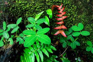 wild tropical plants with red fern frond