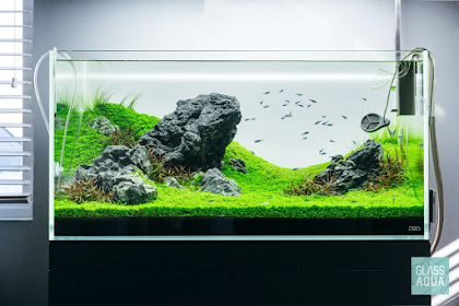 Surya Aquascape